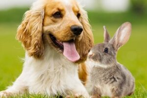 dog-rabbit